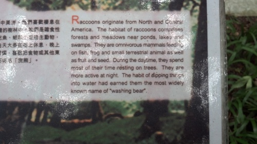 Apparently, we call them Washing Bears.